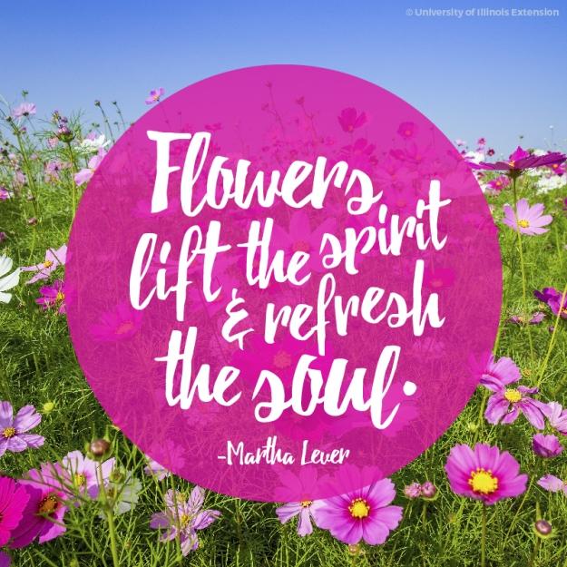 Martha Lever quote