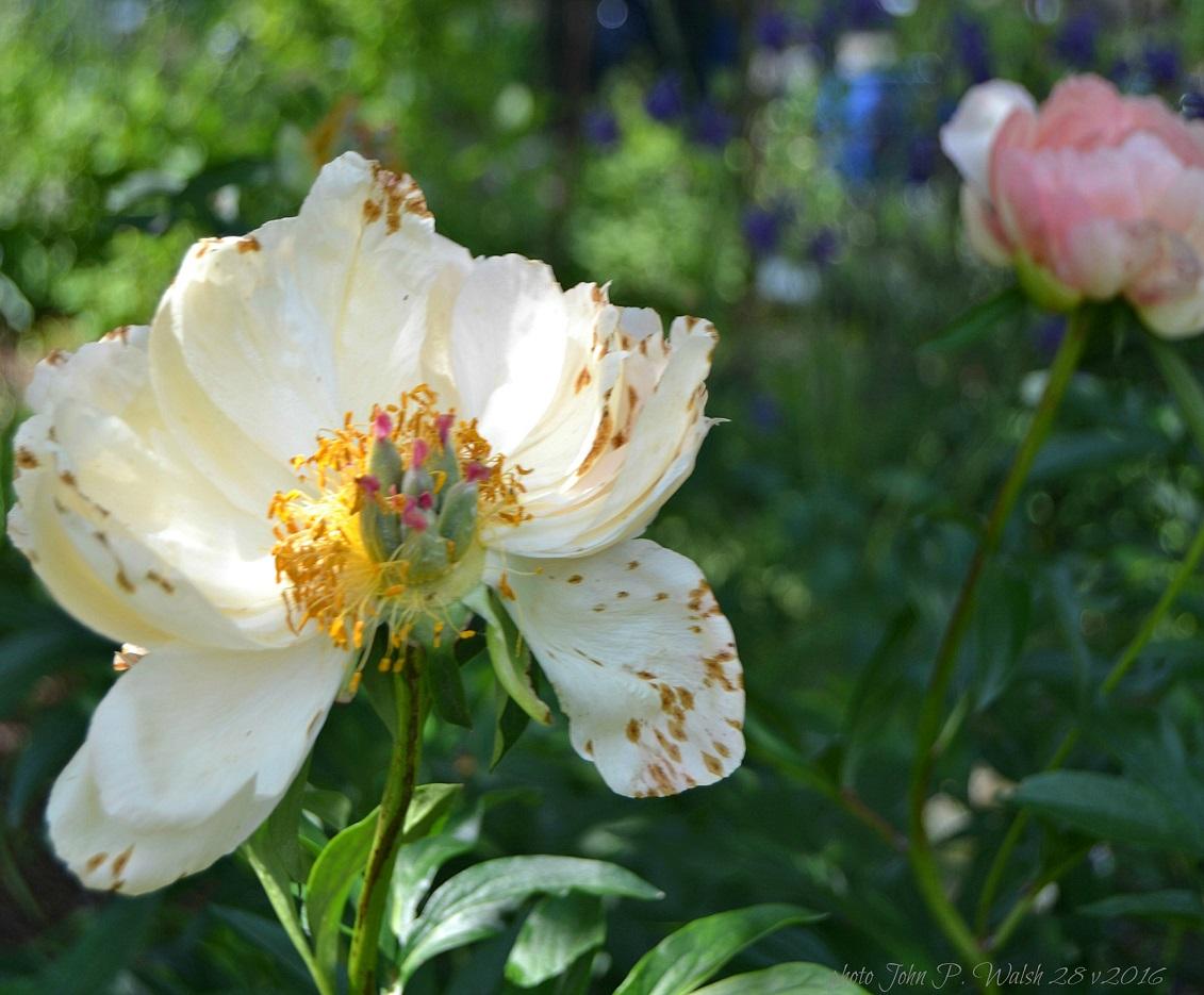 3. may garden May 28 2016.