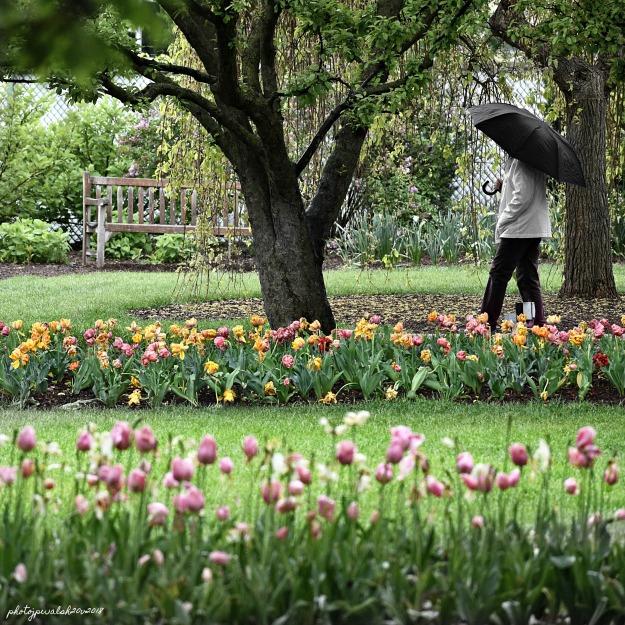 garden walk  jpw
